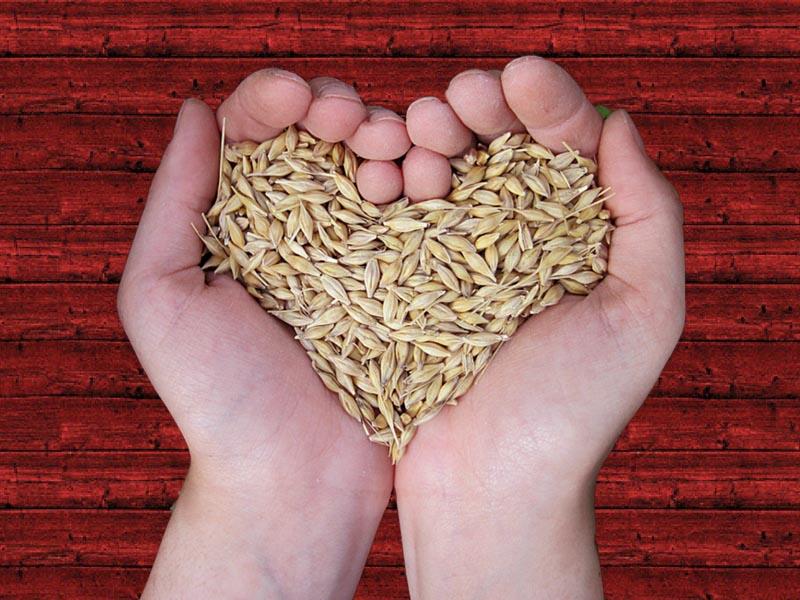 herboristeria bio bio asesoramiento en alimentacion donostia urbieta 33 optimizado